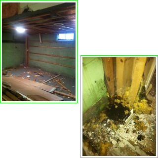 foundation repair healthy spaces inc